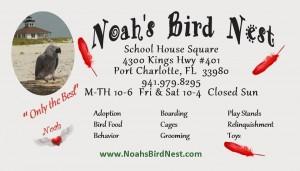 Noah's Bird Nest